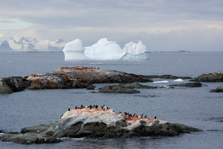antarktis-eisberg-pinguin-insel